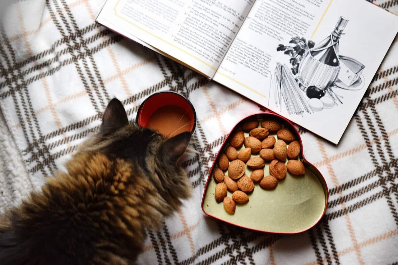 חתול אוכל