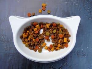 מזון לחתולים בצבעים שונים